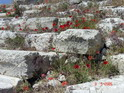 Маки на развалинах Театра Диониса