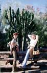 Огромный кактус в Мексиканском секторе